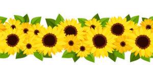horizontaler-nahtloser-hintergrund-mit-sonnenblumen-und-calendula-32995560